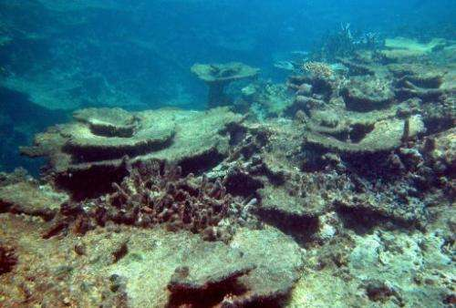 Outbreaks of the poisonous and spiny starfish, which feast on coral polyps, was linked to 42% of the destruction