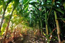 Oxfam estimated the world market export price of maize in 2030 could be 177% higher than in 2010
