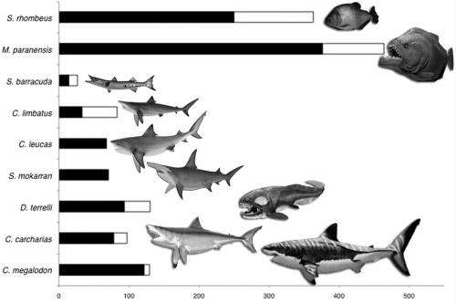 Piranha kin wielded dental weaponry even T. rex would have admired