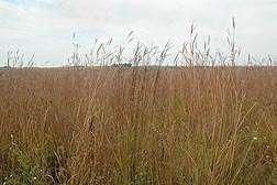 Prairie restoration also helps restore water quality