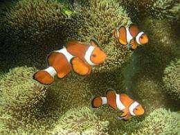 Present ocean acidification rates are unprecedented: research