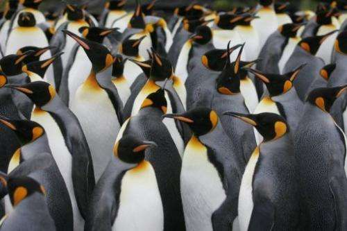 Previous finds from prehistoric penguins indicate they had reddish-brown and gray plumage