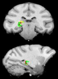 Princeton study reveals the brain's mysterious switchboard operator