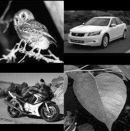 Sex matters: Guys recognize cars and women recognize birds best
