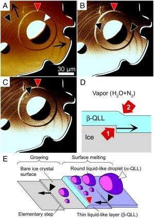 The hidden nanoworld of ice crystals: Revealing the dynamic behavior of quasi-liquid layers