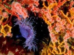 Sea anemones venom key to Multiple Sclerosis treatment