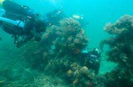 Shipwreck to give up its history