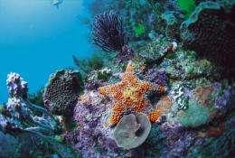 Some corals could survive a more acidicocean