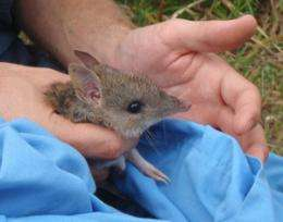 Study suggests new method of identifying native species