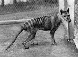 Tasmanian tiger suffered low genomic diversity