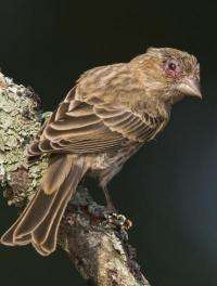 Deadly bird parasite evolves at exceptionally fast rate