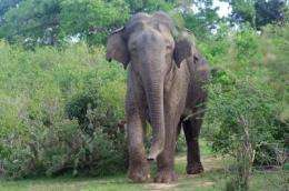 The absence of elephants and rhinoceroses reduces biodiversity in tropical forests