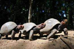 The turtle is a closer relative of crocodiles and birds than of lizards and snakes, according to researchers