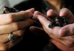 The turtles were carried back to the Philippines in wooden crates and will be released back into the wild