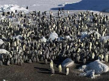 Two new emperor penguin colonies in Antarctica