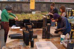 Ecologists explore new explanation for plant productivity