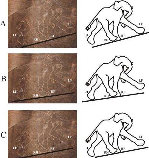 Cavemen were better at drawing animals than modern artists