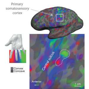 Where does it hurt? Pain map discovered in the human brain