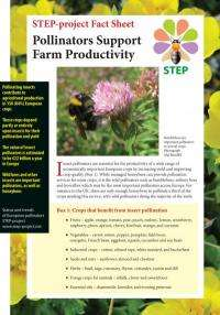 Wild bees: Champions for food security and protecting our biodiversity