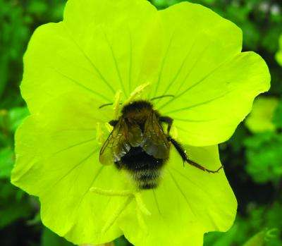Wild pollinators support farm productivity and stabilize yield