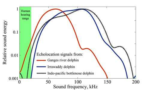 An ancient biosonar sheds new light on the evolution of echolocation in toothed whales