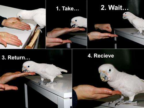 Doing business with a parrot: Goffin cockatoos trade with nuts in an exchange experiment