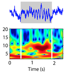Eye movements reveal rhythm of memory formation