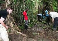 Fatal fungus found in third major amphibian group, caecilians