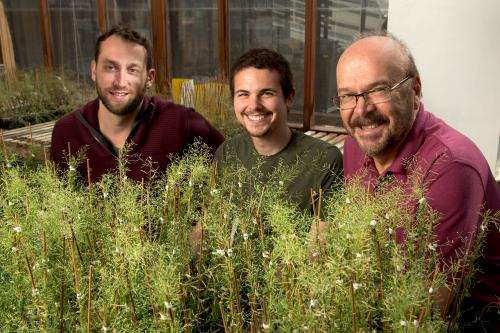Hidden layer of genome unveils how plants may adapt to environments throughout the world