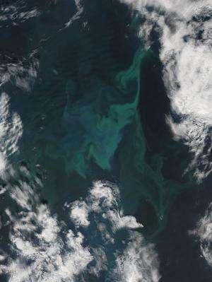 Phytoplankton Bloom in the Norwegian Sea