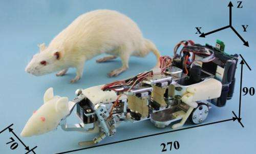 Researchers build robot rat to induce stress in lab animals (w/ Video)