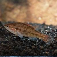 Researchers name new fish species