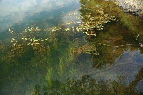 Study challenges prevailing view of invasive species