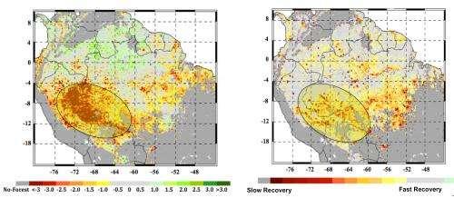 Study Finds Severe Climate Jeopardizing Amazon Forest