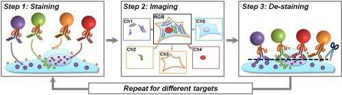 Tenfold boost in ability to pinpoint proteins in cancer cells