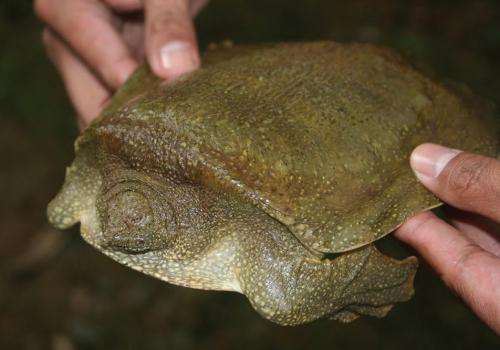 The amazing amphibians and reptiles of the Philippine island Luzon