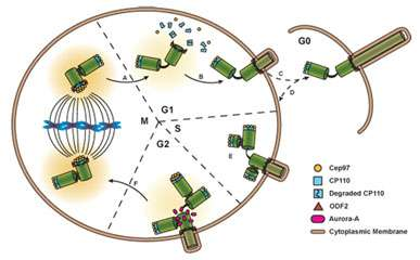 The inheritance of the primary cilium and the soul of the cell