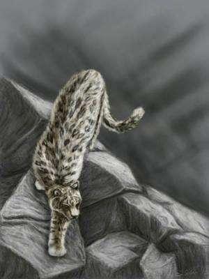 Zanda Basin yields new Pantherine fossils