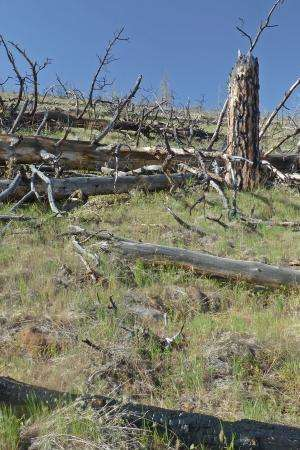 Climate change threatens forest survival on drier, low-elevation sites