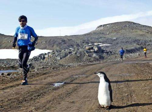 File picture shows a runner passing a penguin during a marathon in the Antarctic where plans to create two vast ocean sanctuarie