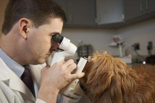 1-2 punch could be key in treating blindness