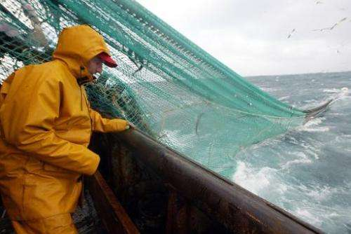 File picture shows a fisherman on an offshore trawler based in Concarneau, western France checking his nets early December 2003