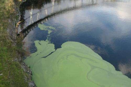 Breakthrough discovery links blue-green algae with motor neuron disease