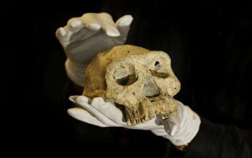 1.8M-year-old skull gives glimpse of our evolution