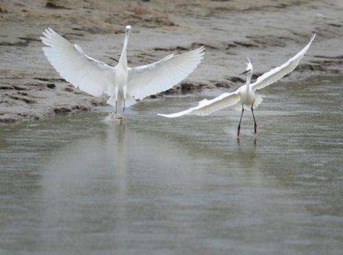 A picture taken on April 29, 2011 shows water birds flying over a Danube Delta's canal next to Tulcea city