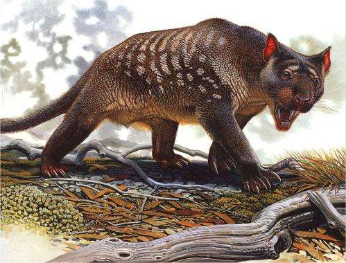 New study finds no evidence for theory humans wiped out megafauna