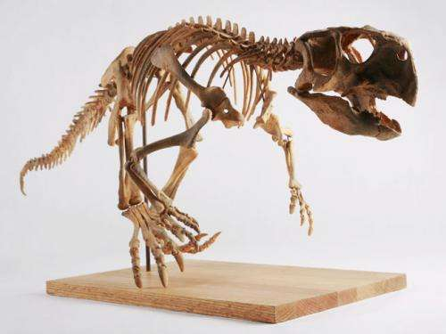 Exploring dinosaur growth