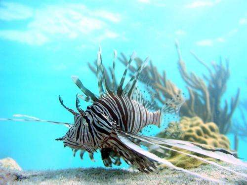 Lionfish expedition: Down deep is where the big, scary ones live