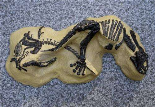 'Montana Dueling Dinosaurs' to sell at NYC auction