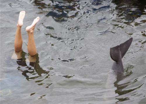 Study: Dolphins can problem solve like humans
